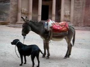 dog-and-donkey